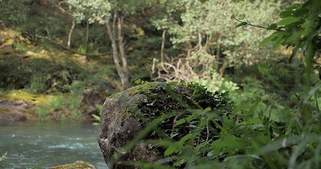 Proyecto Tierra-4: Aplicativos de información geográfica para la gestión y control forestal (TIERRA-4).